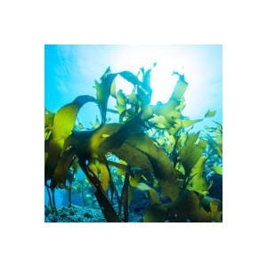 Meeresgemüse